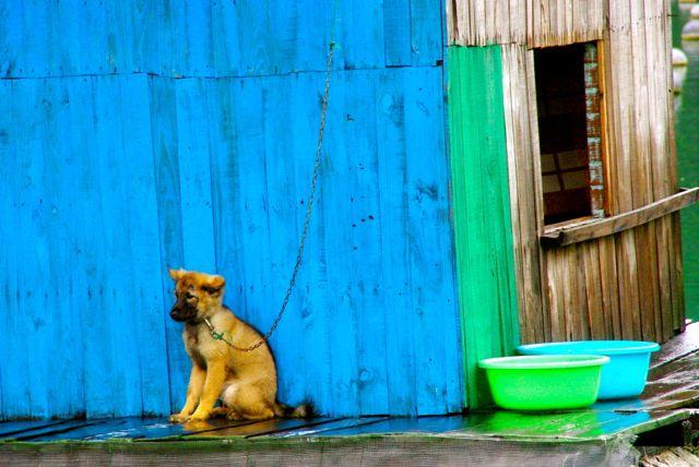 colorful dog halong bay