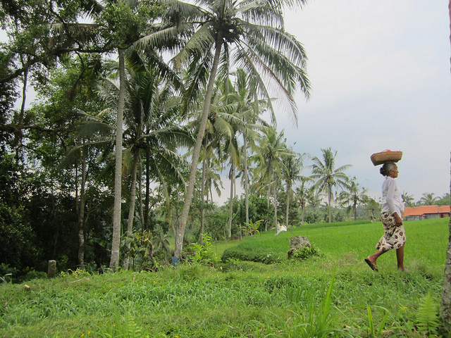 Rice-Fields-Bali-Traveling9to5
