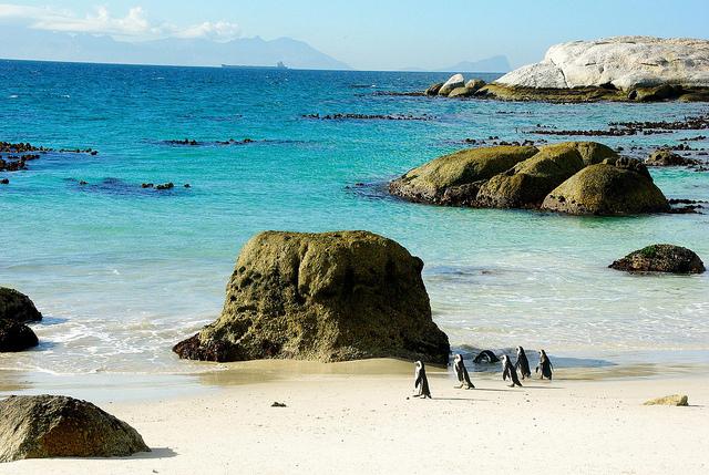 Penguins at boulder beach