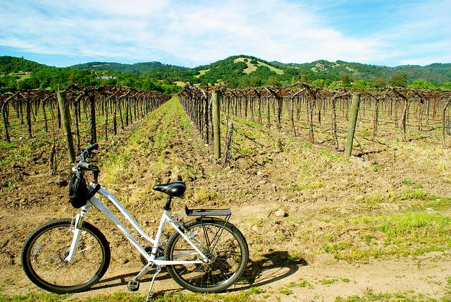 biking in sonoma wine tasting
