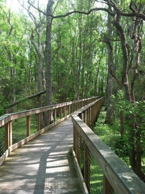 Conservation Park Green